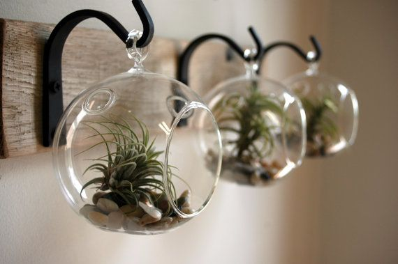 Hanging air plants on wall image via etsy ilevel for Air plant wall hanger